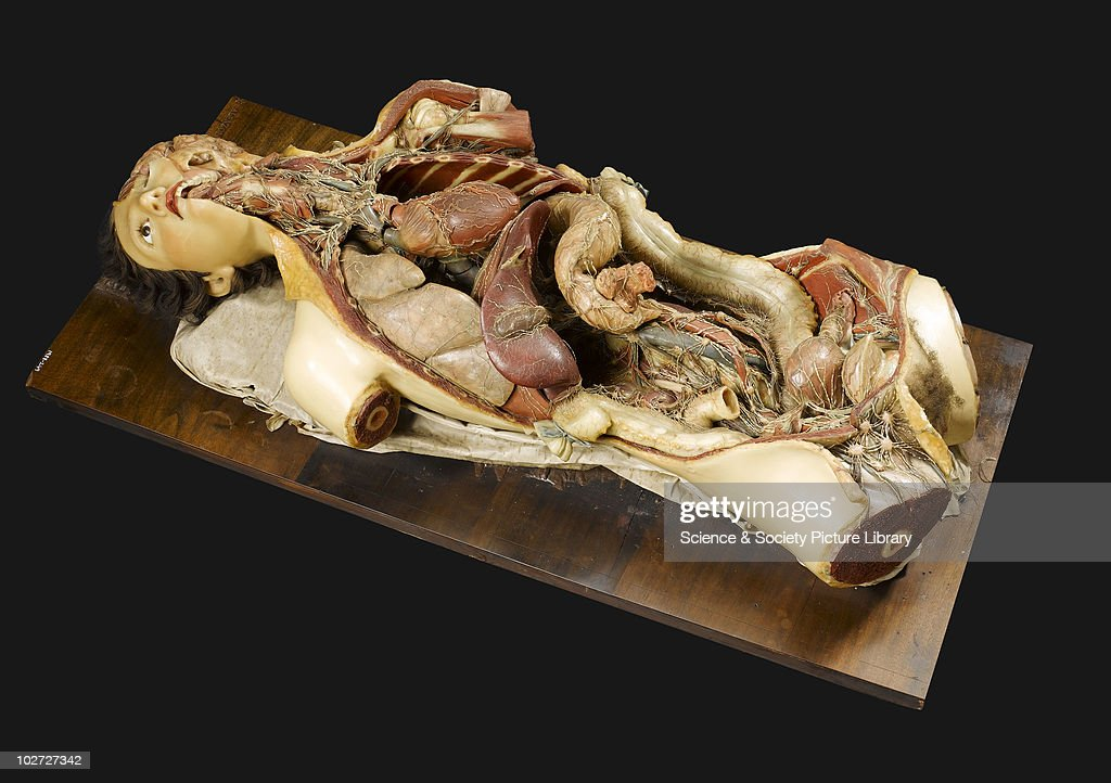 Wax anatomical model of a female showing internal organs Florence Italy 1818 Wax anatomical model of female torso and head showing internal organs...