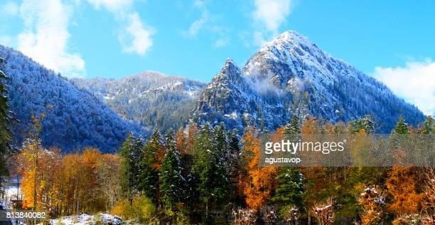 Waxenstein  Bavarian Alps, idyllic Pine trees woodland under snow landscape, majestic alps valley, dramatic Bavaria german Snowcapped mountain range panorama, Berchtesgaden alps, Germany