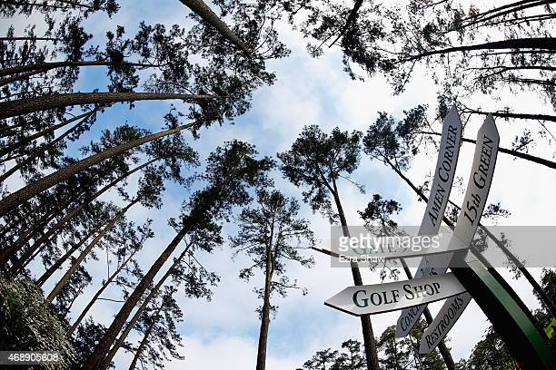 Way signs are seen under a set of pine trees during a practice round prior to the start of the 2015 Masters Tournament at Augusta National Golf Club...