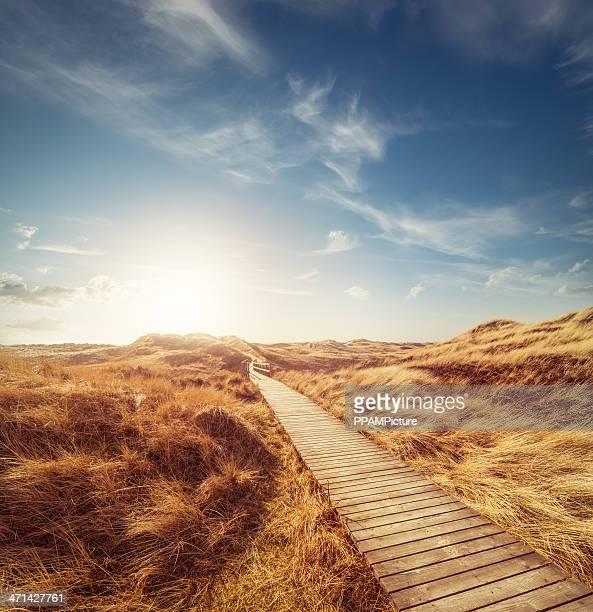 Camino a través de las dunas