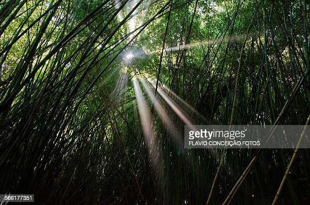 Way through the forest of bamboo