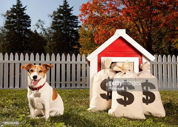Wealthy Dog