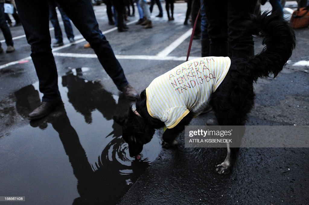 Wearing a dress with a text 'My owner doesn't ask any tuition fee', a dog drinks water as around 1,000 protesters -- including pupils from over 40 schools, according to organisers -- preapare for their march on December 19, 2012 through downtown Budapest. Protests over higher education reform in Hungary spread further Wednesday, even after the government made apparent concessions to students, angry about planned tuition fees and commitments to work in Hungary. Many wore roses to symbolise what they call the 'Student Winter Rose revolution.'