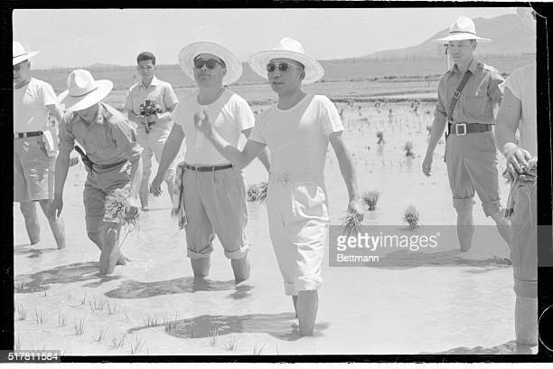 Wearing a farmer's straw hat a tshirt and rolled up white trousers South Korea's strong man General Park Chung Hee transplants rice saplings in a...