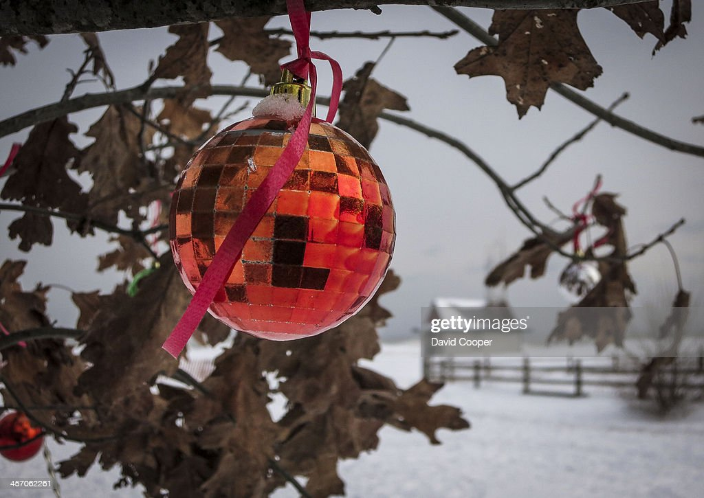 Christmas ornaments decorate a small tree near the boardwalk by the