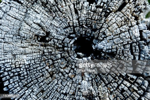 Weathered Cross Section of Tree : Stock Photo
