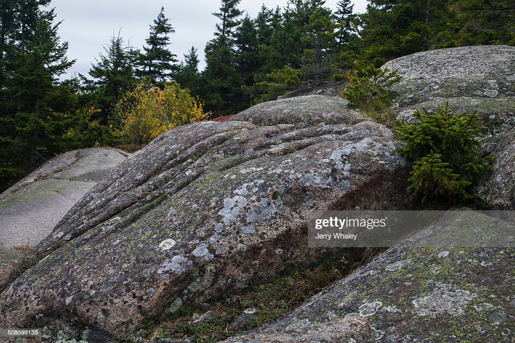 Weathered Granite on Beech Mtn Trail, Acadia : Stock Photo