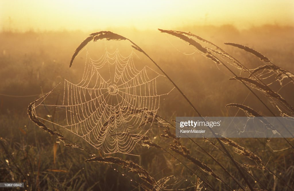 Web with Dew : Stock Photo