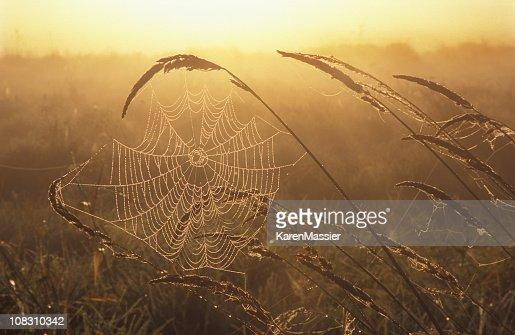 Web with Dew : Stock Photo