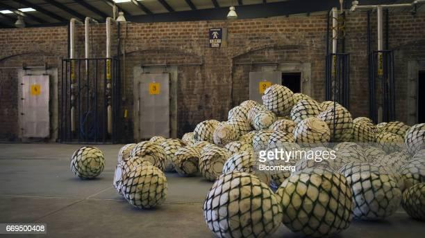 Weber Blue agave pine cones called pinas sit at the Patron Spirits Co distillery in Atotonilco El Alto Jalisco Mexico on Tuesday April 4 2017 The...