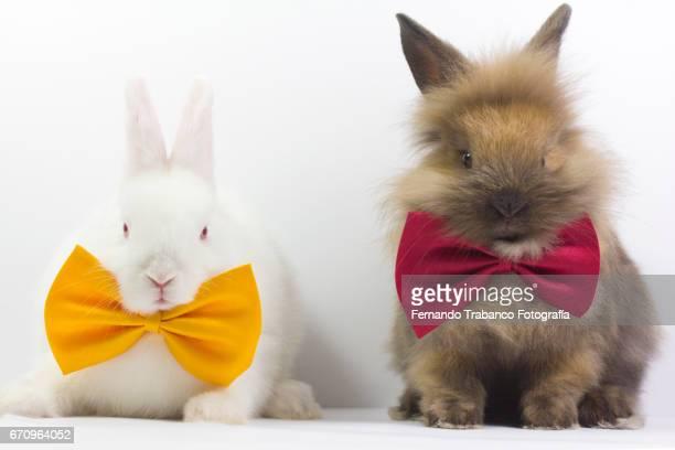 Wedding couple of elegant rabbits with bow tie on their wedding day. Honeymoon
