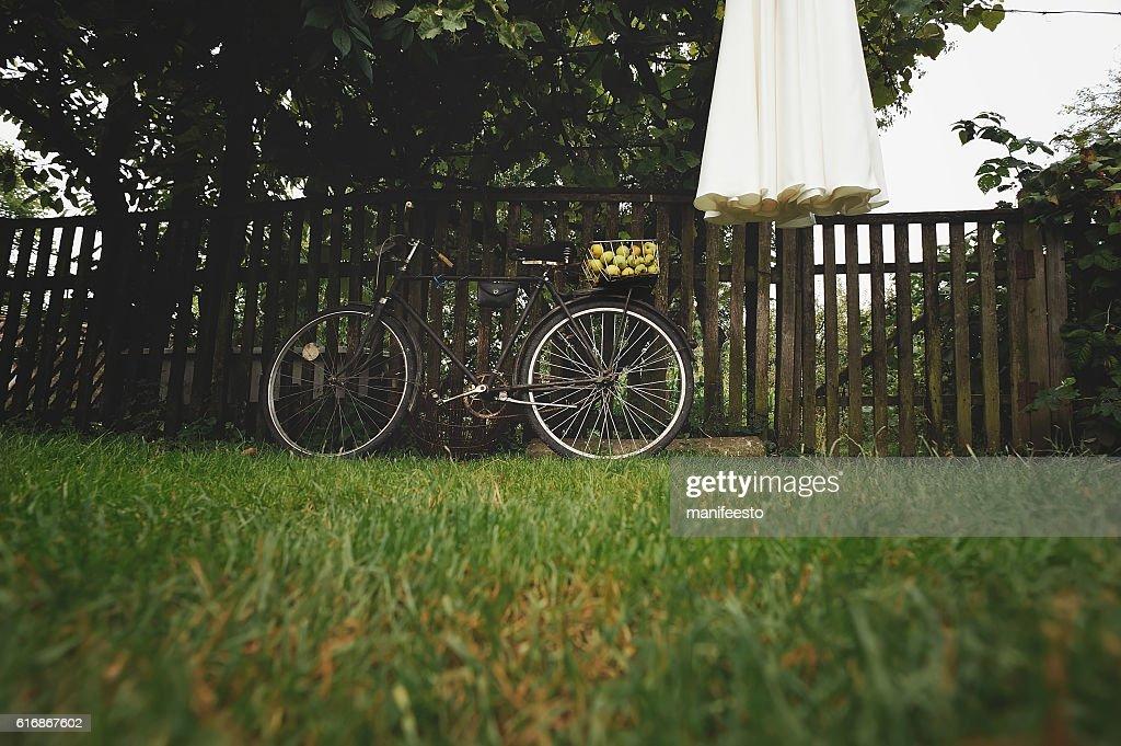 Wedding dress hangs on grape vine in garden : Stock Photo