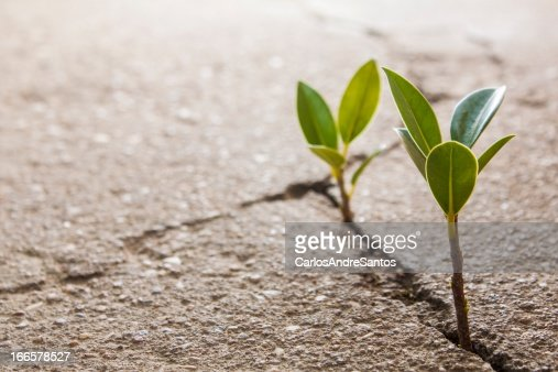 weed growing through crack in pavement : Stock Photo