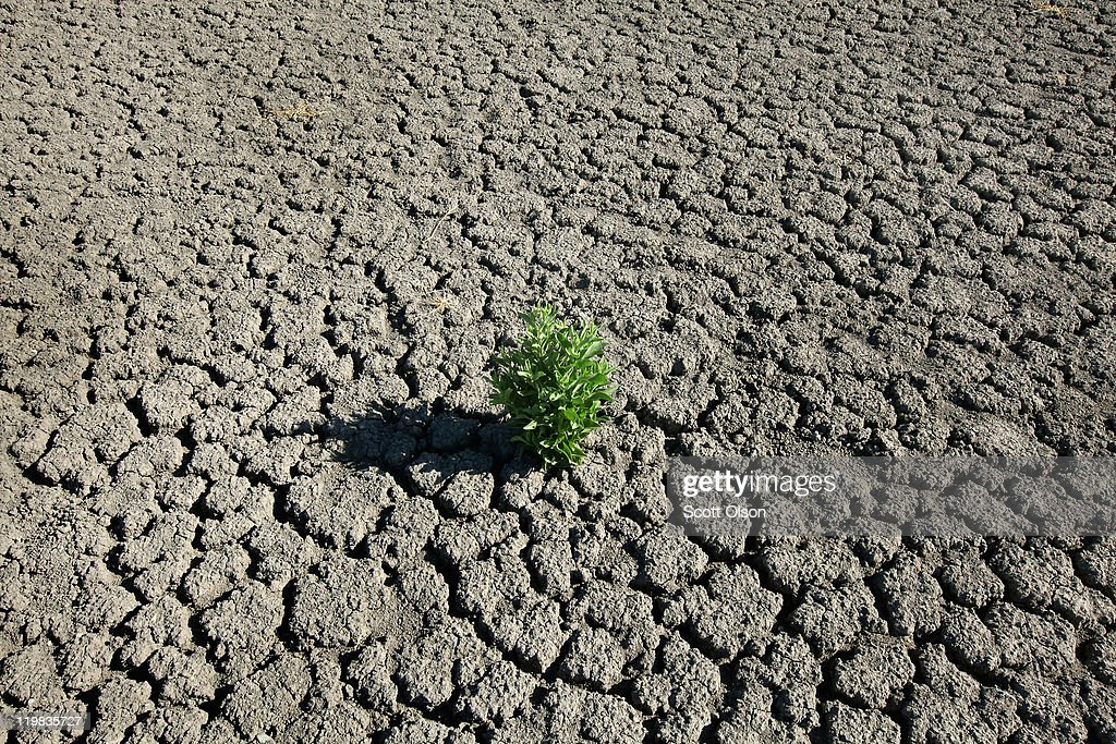 A weed grows out of the dry cracked bed of O.C. Fisher Lake on July 25, 2011 in San Angelo, Texas. The 5,440 acre lake which was established to provide flood control and serve as a secondary drinking water source for San Angelo and the surrounding communities is now dry following an extended drought in the region. The lake which has a maximum depth of 58 feet is also used for boating, fishing and swimming. The San Angelo area has seen only 2.5 inches of rain this year. The past nine months have been the driest in Texas since record keeping began in 1895, with 75% of the state classified as exceptional drought, the worst level.