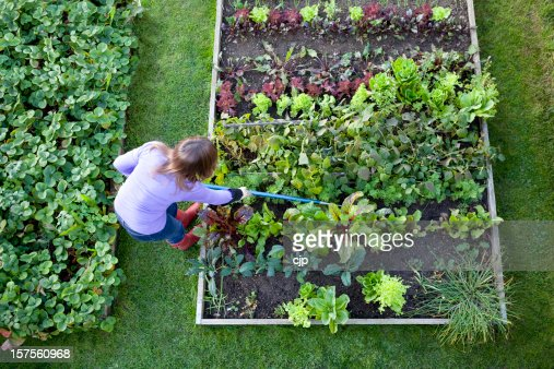 Weeding Veg Patch Gardener from Overhead