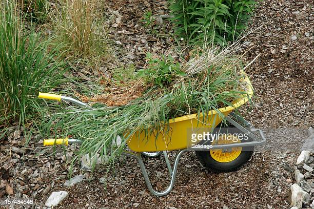Weeds And Grass Clean Up In The Wheelbarrow