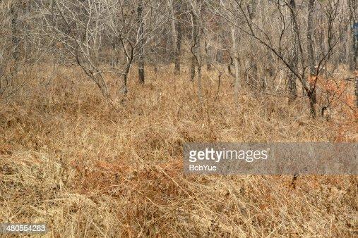Ervas daninhas Chão : Foto de stock