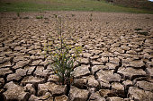 Weeds grow in dry cracked earth that used to be the bottom of Lake McClure on March 24 2015 in La Grange California More than 3000 residents in the...