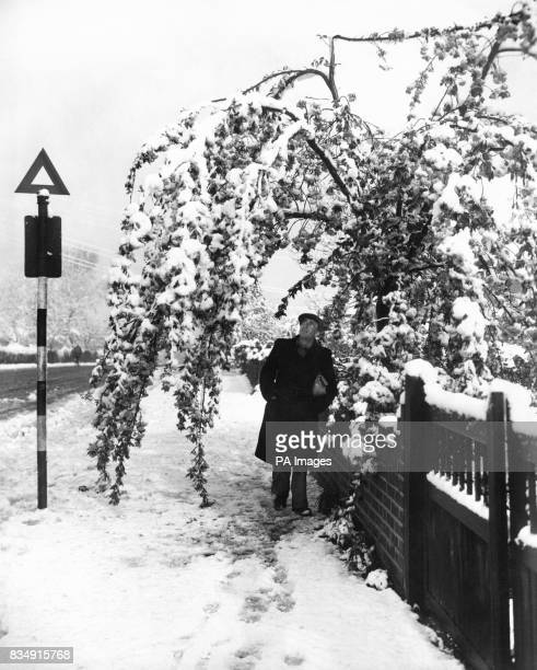 Weighed down to the whiteclad ground with its 'blossom' of snow is this cherry tree at West Wickham Kent after the night's heavy snow fall