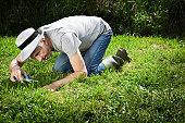 Senior gardener on his knees cutting grass with scissors.