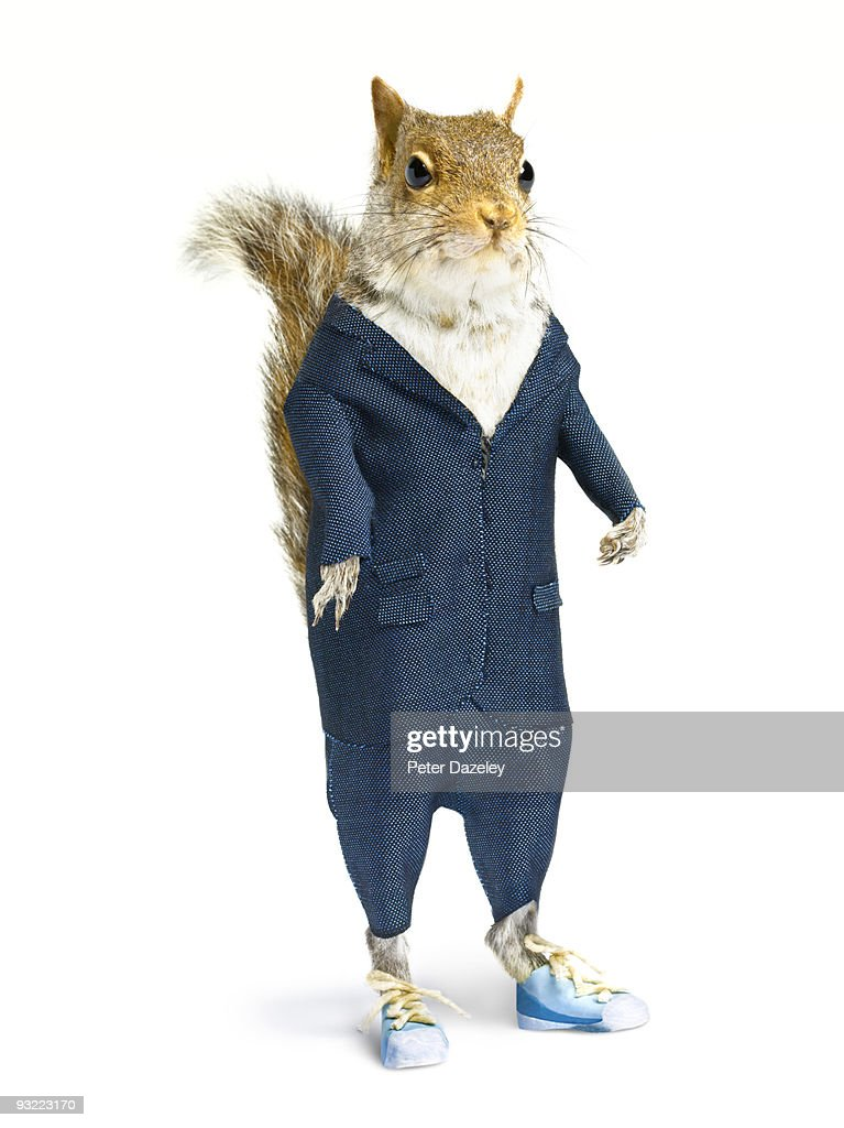 Well dressed squirrel in suit on white background. : Stock Photo