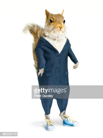 Well dressed squirrel in suit on white background.