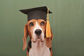 Well Educated Dog