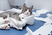 little tiger cat playing in the bathroom with toilett paper