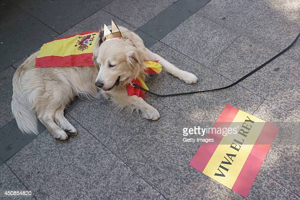 A wellwisher with his dog gather on the streets of Madrid prior to the King's official coronation ceremony of King Felipe VI on June 19 2014 in...