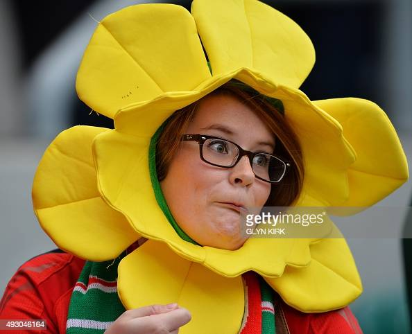 A Welsh fan dressed as a daffodil reacts as she waits for the start of the quarter final match of the 2015 Rugby World Cup between South Africa and...