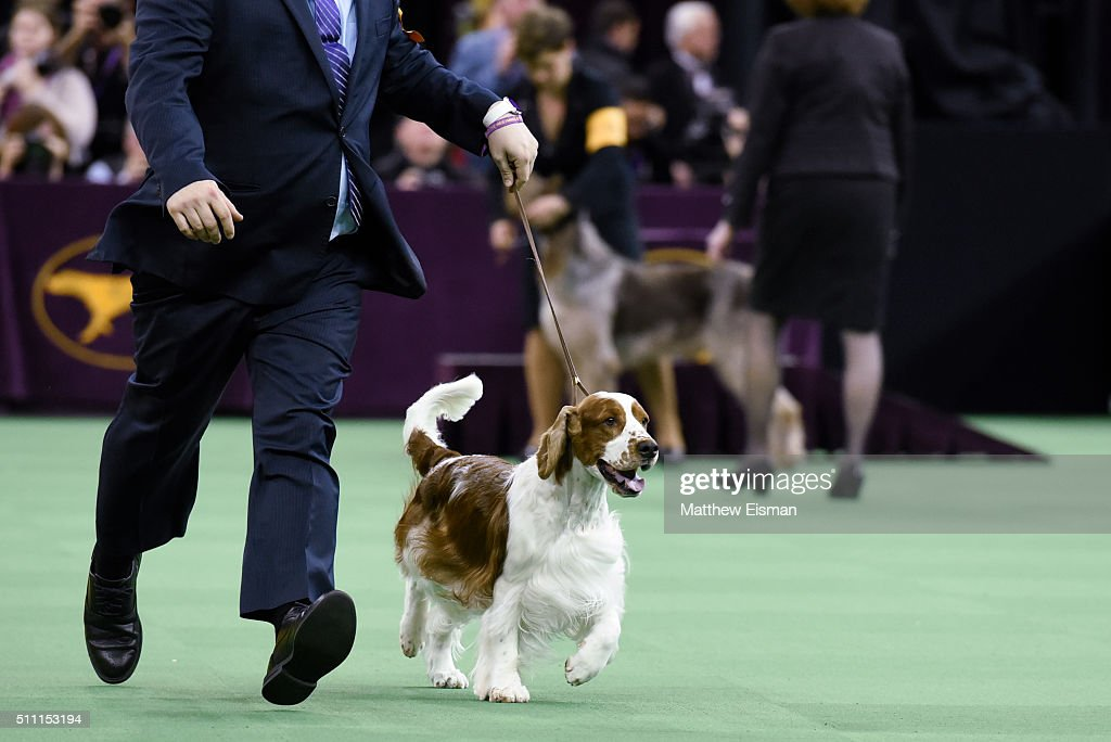 Westminster Kennel Club Dog Show Getty Images
