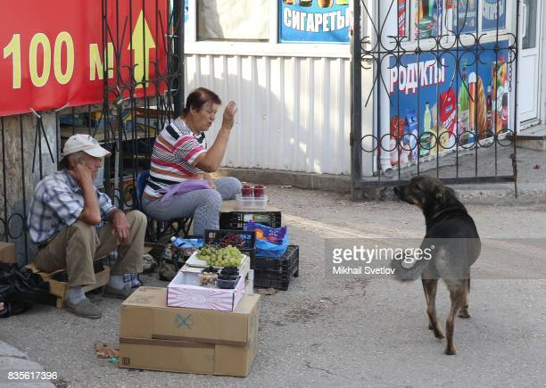 A wendor gestures as as stray dog looks on at the street market in Sevastopol Crimea August 19 2017 Poster reads 'Sevastopol is outpost of the future...