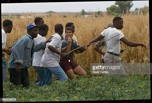 West African immigrant farm workers capture an Algerian immigrant worker who has stolen bags out of a car The West Africans feel they are always...