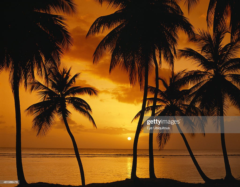 palm tree silhouettes against sunset