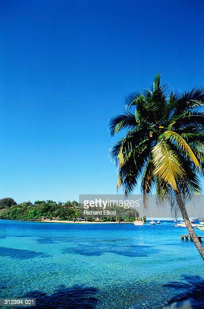 West Indies,Grenadines,Young Island from St Vincent,palm tree in fore
