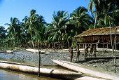 West New Guinea Asmat Region Tribal Village In Rain Forest