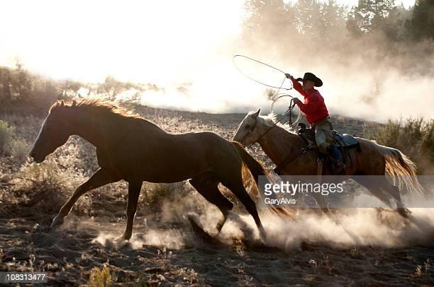 Western roundup avec course de chevaux, de cow-boy roper action, éclairées de la poussière