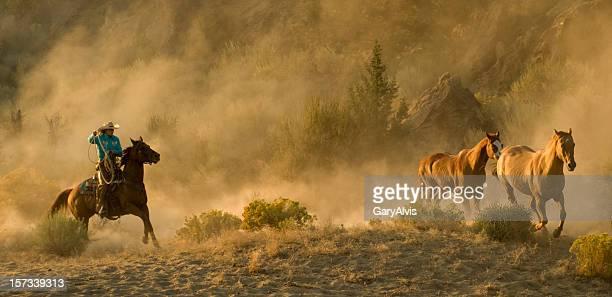 Western Roundup-course de chevaux, de cow-girl, éclairées de la poussière