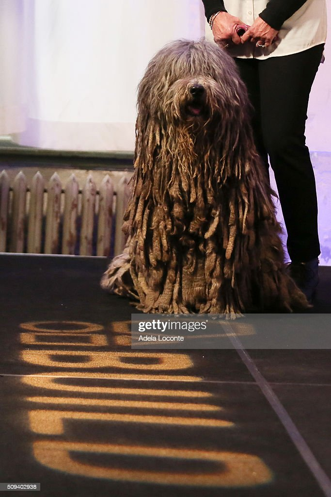 Westminster Kennel Club Dog Show attends at AOL Studios In New York on February 10, 2016 in New York City.
