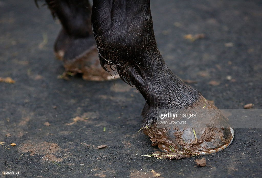 A wet and muddy day at Fakenham racecourse on February 08, 2016 in Fakenham, England.