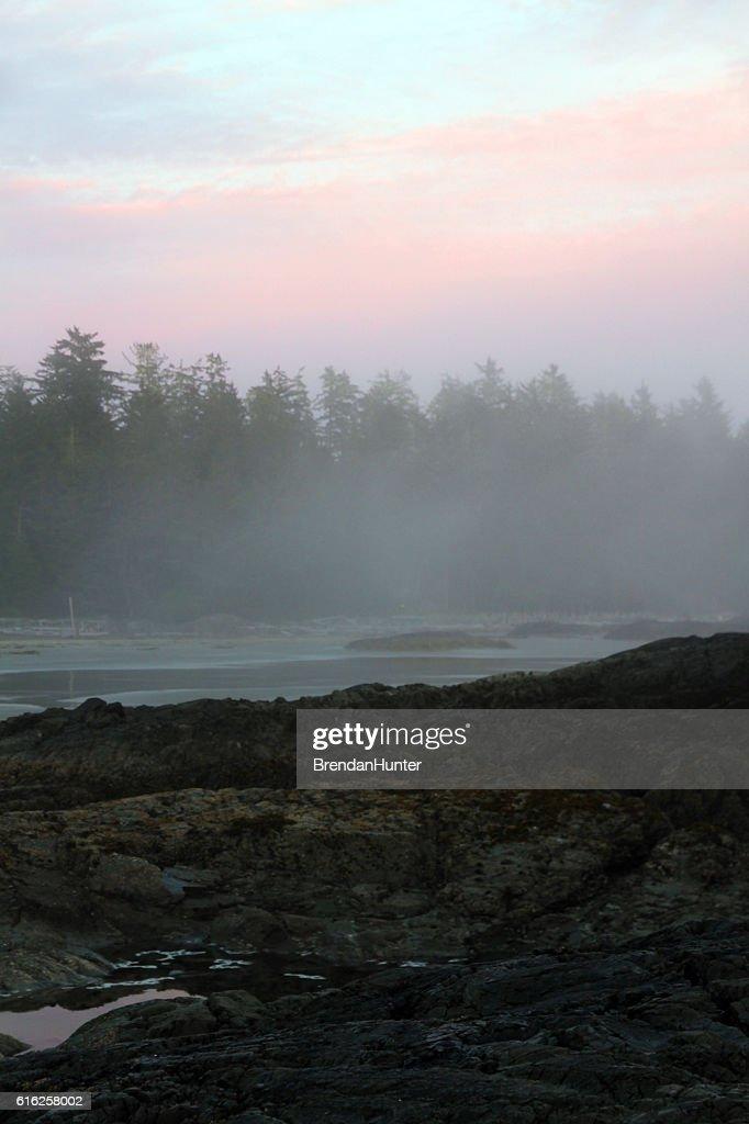 Floresta de chuva : Foto de stock