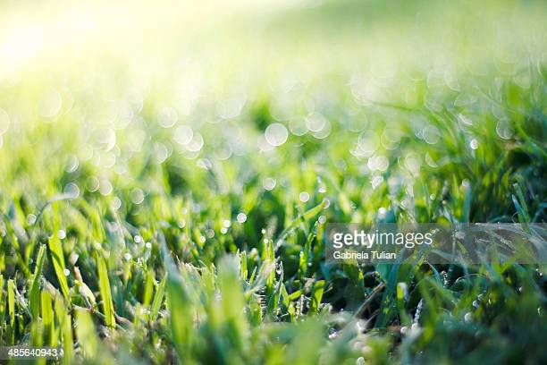 Wet grass in the morning