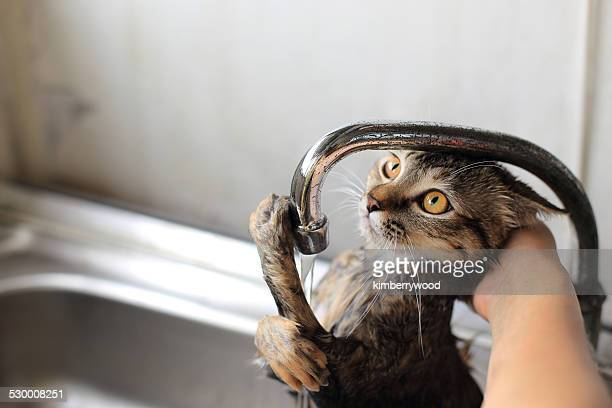 Young Cat was taken bath