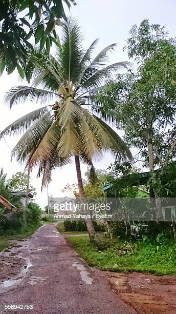 Wet Road By Palm Tree And House Against Clear Sky