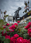 Wet Roses and Barbaro Statue