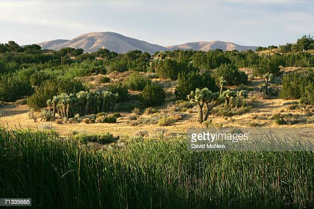 A wetland in the desert the result of water coming to the surface through the San Andreas Fault is seen before sunrise on June 29 2006 near Palmdale...