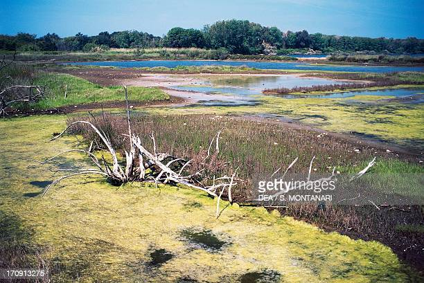 Wetland in the Pantani dell' Inferno State Nature Reserve National Park of Circeo Lazio Italy