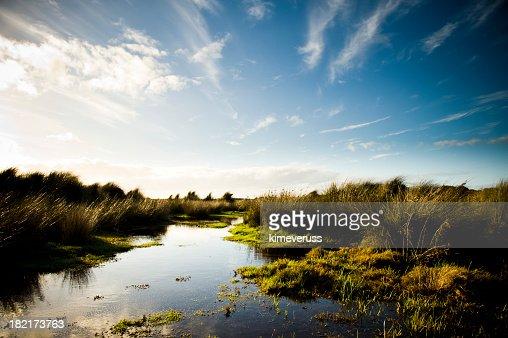 Wetland swamp marsh grass tufts