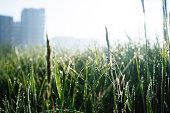 Wetlands nature park