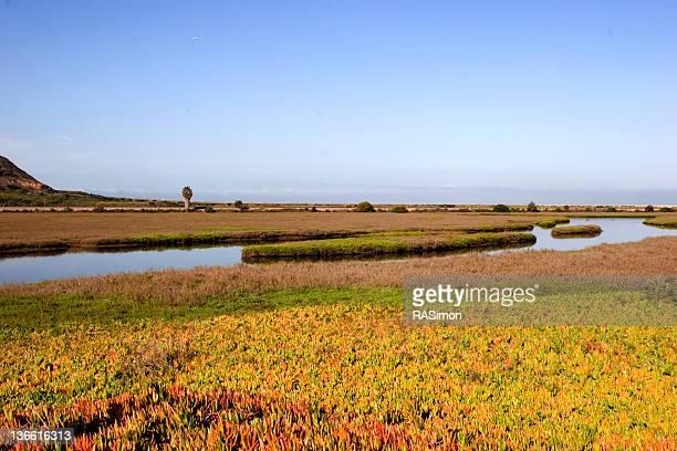 Wetlands near the ocean